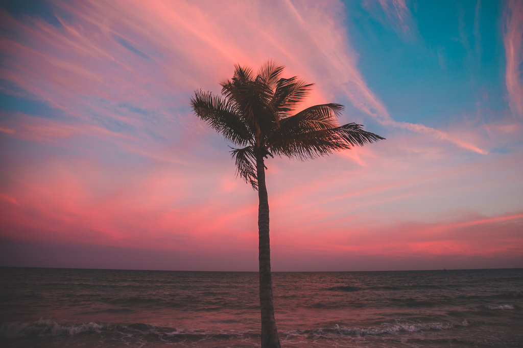 Palm Tree in Cancun